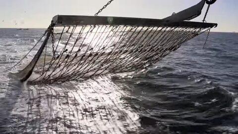 Pulse fishing video still